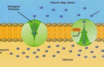 Bakteriler ve Özellikleri
